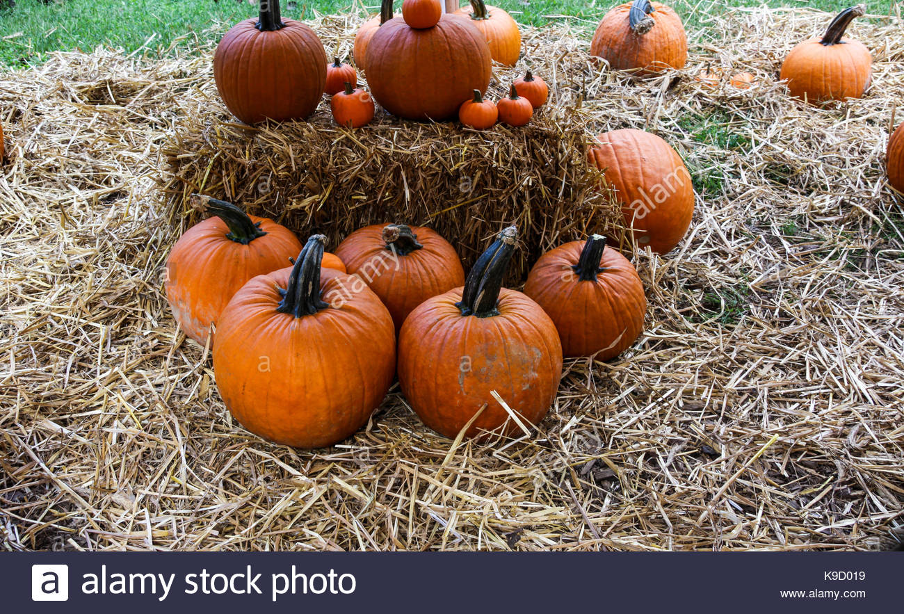 Pumpkins around hay bale - Stock Image