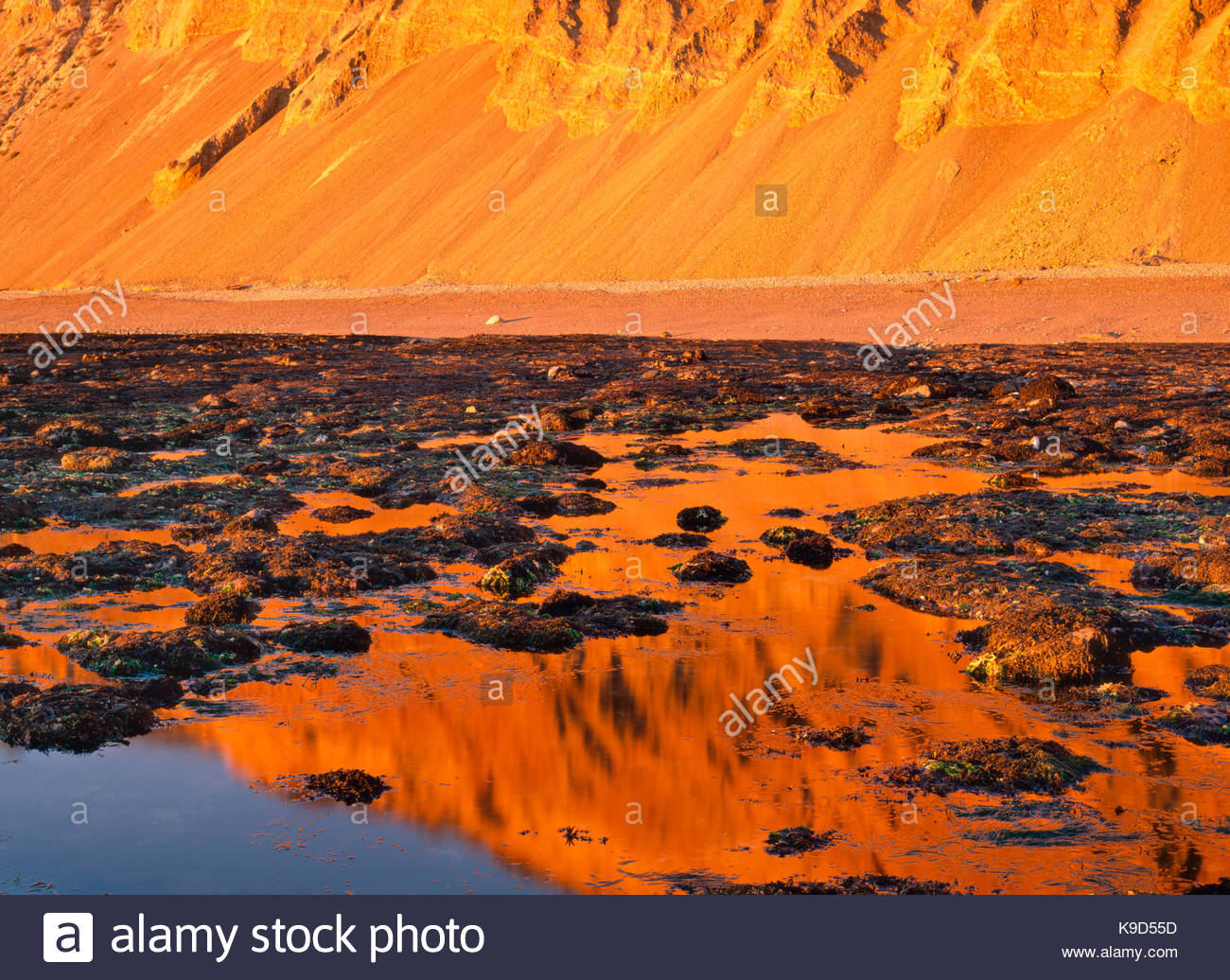 Sunset Glow on Cliffs and Tidepools, Point Reyes National Seashore, California - Stock Image