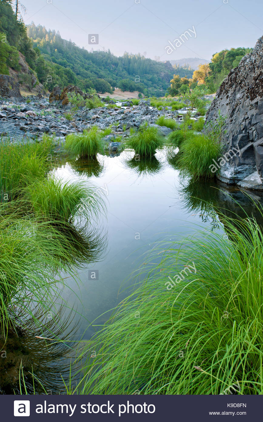 Grasses in the Eel River,Mendocino County, California - Stock Image