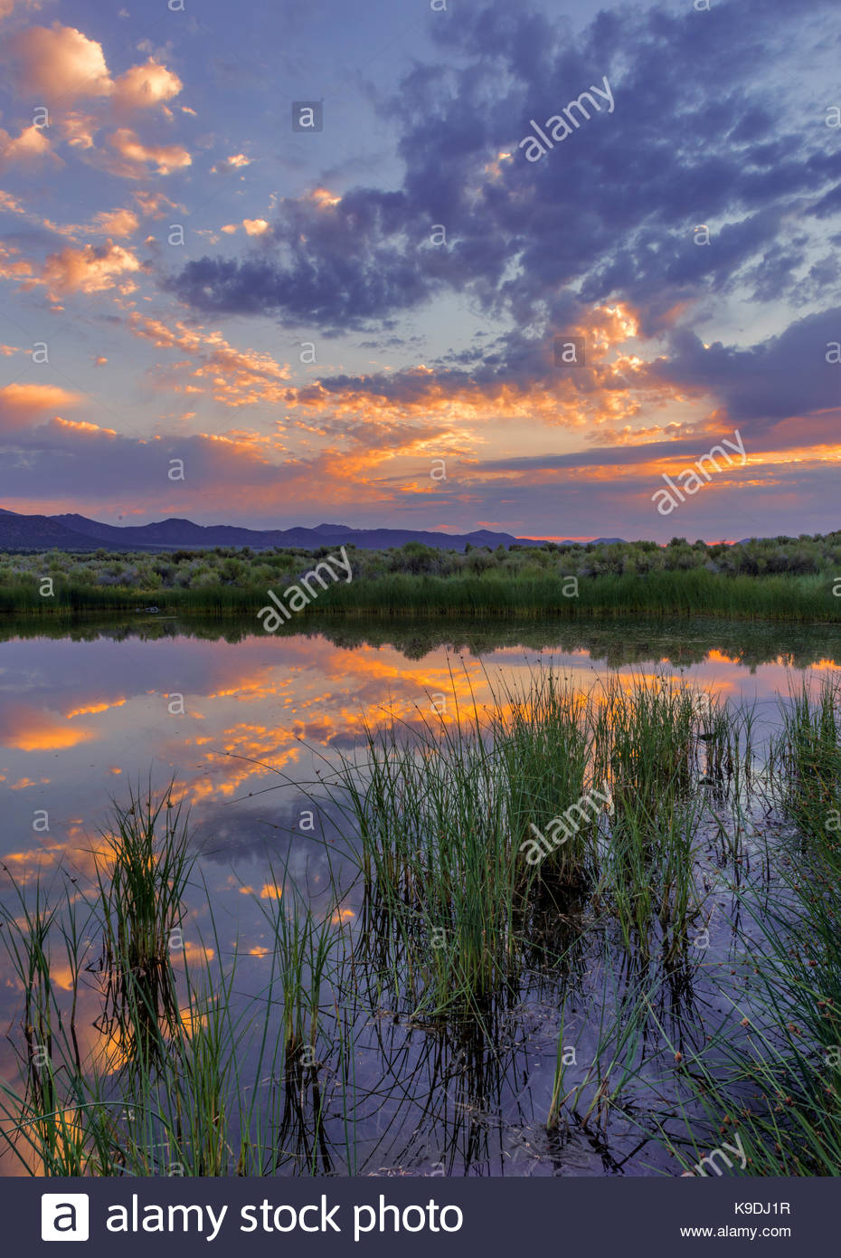 Dechambeau Ponds at Dawn, Mono Basin National Forest Scenic Area, California - Stock Image