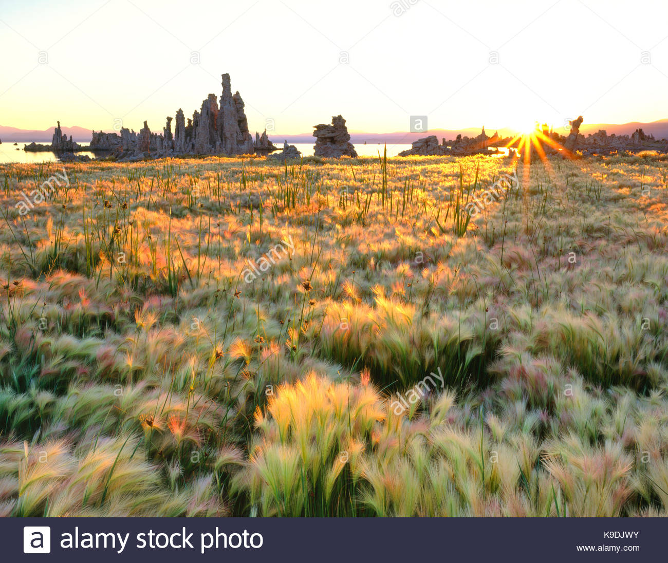 Rising Sun on Wild Barley and Tufa Formations, Mono Lake, Mono Basin National Forest Scenic Area, California - Stock Image