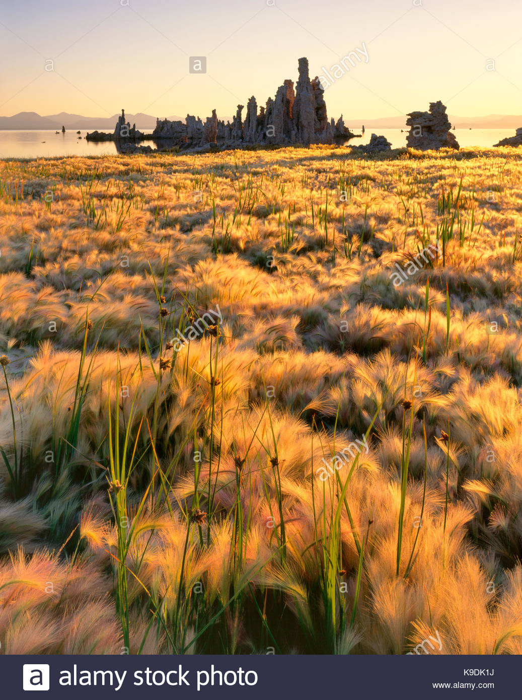 Wild Barley and Tufa Formations, Mono Lake, Mono Basin National Forest Scenic Area, California - Stock Image