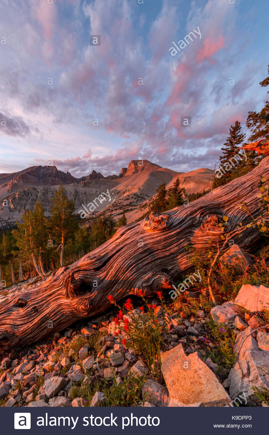 Dawn Clouds, Wheeler Peak and Paintbrush, Great Basin National Park, Nevada - Stock Image