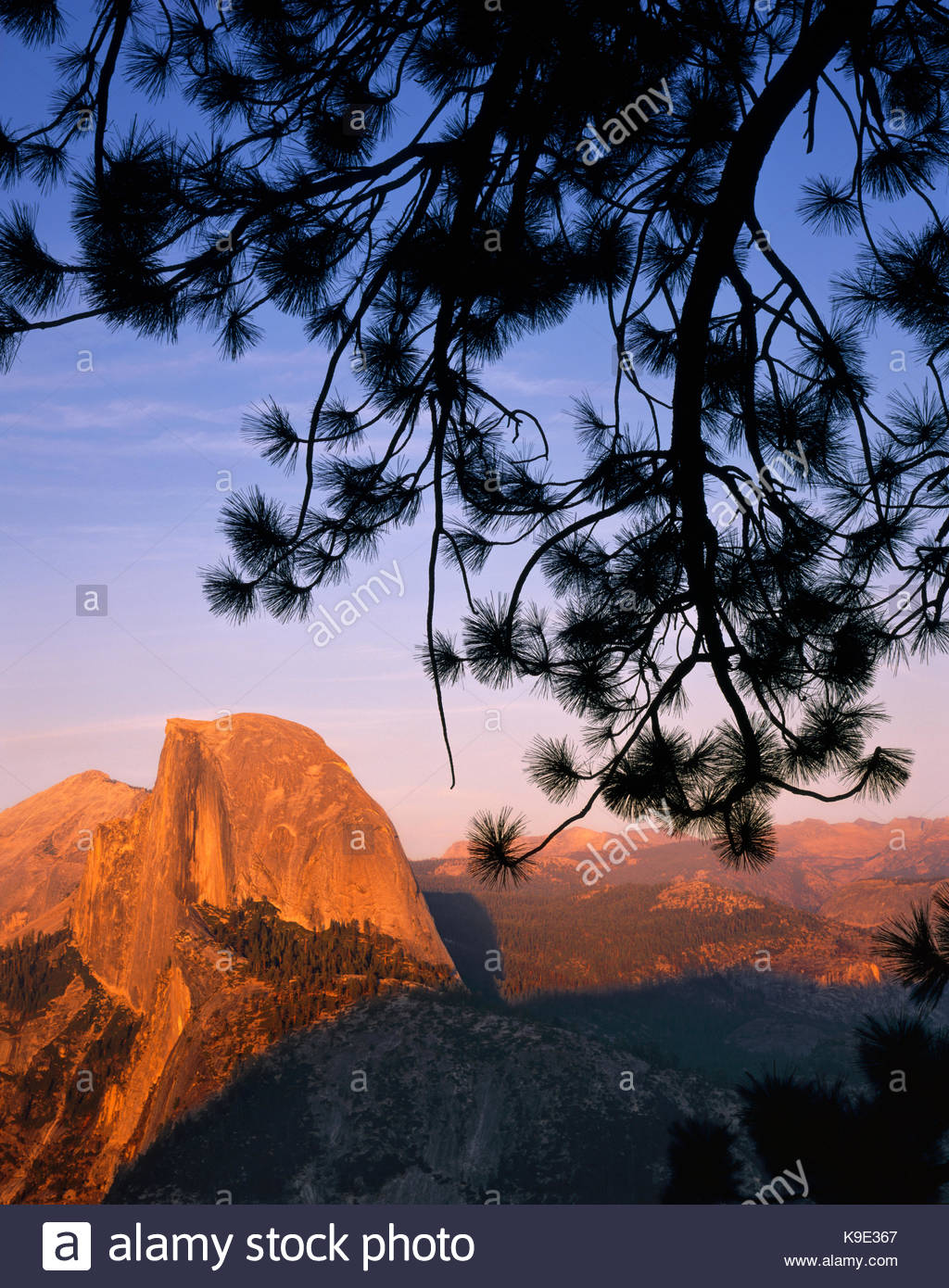Half Dome and Jeffrey Pine from Glacier Point, Yosemite National Park, California - Stock Image