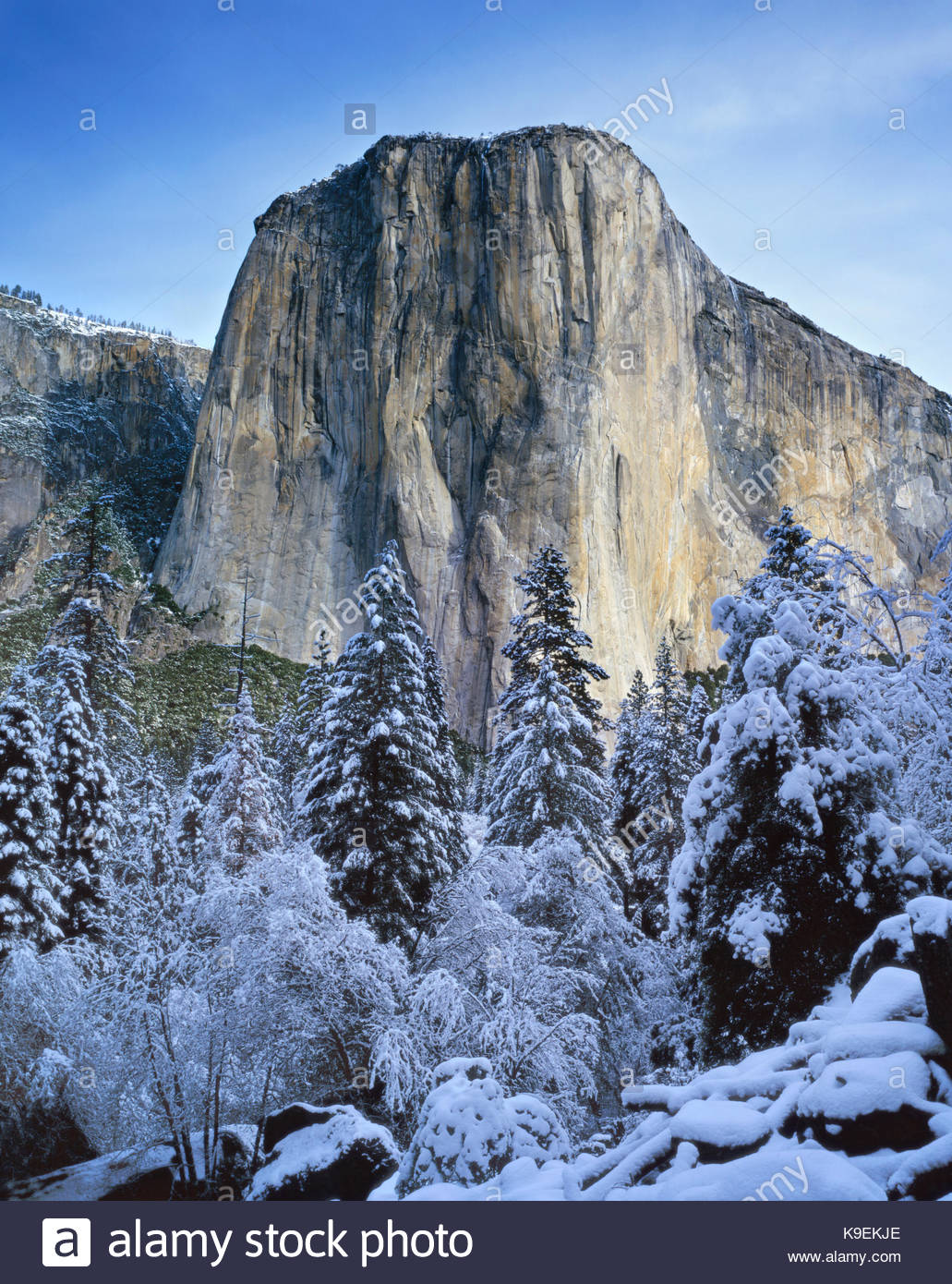 El Capitan Seen through Forest Clearing, Yosemite National Park, California - Stock Image