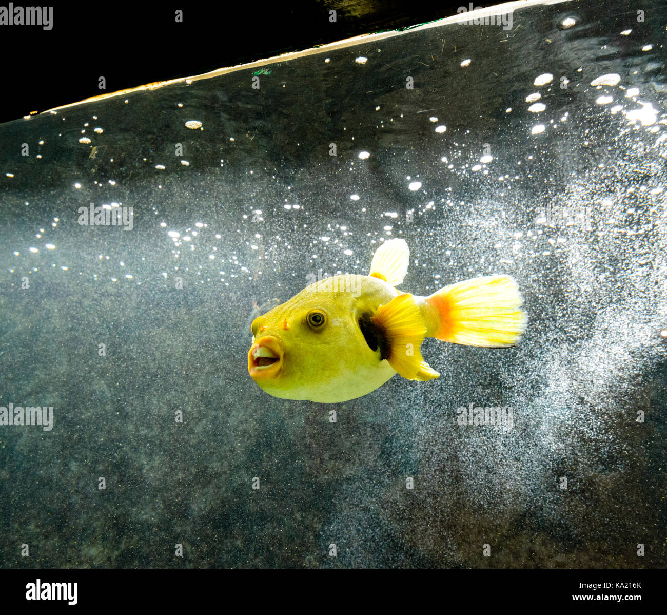 Exotic marine animals stock photos exotic marine animals for Are fish considered animals