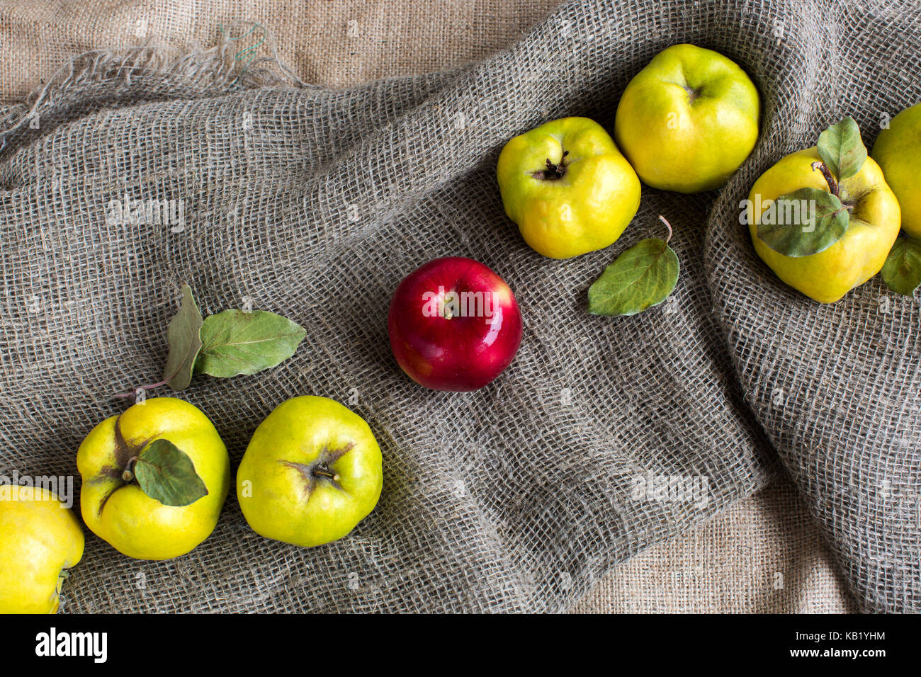food, religion, healthy lifestyle concept. on the grey textured fabric among yellow quinces with green shades there - Stock Image