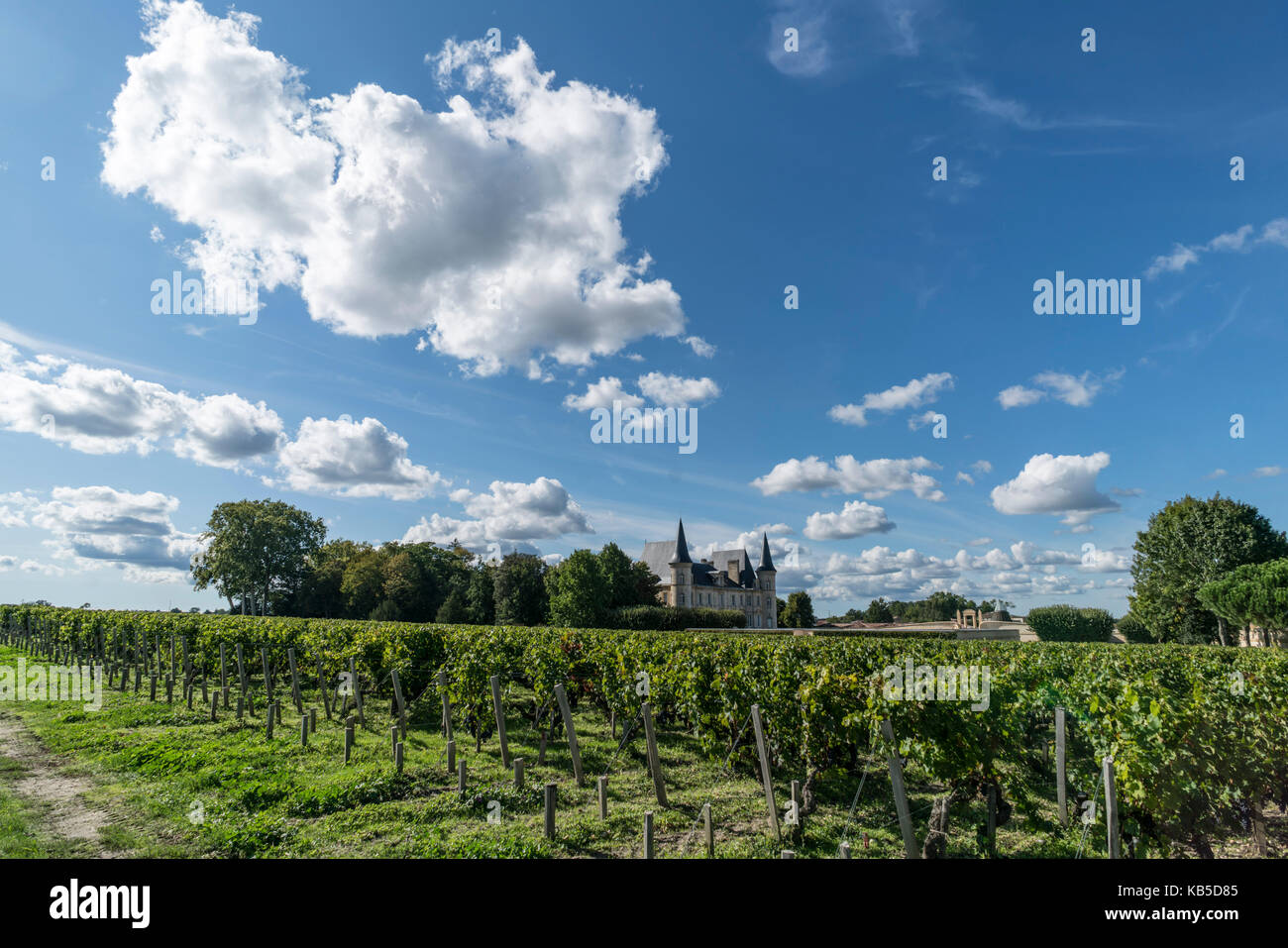 Chateau Pichon Baron , vineyard in Medoc, Margeaux,  grapevine, Bordeaux, Gironde, Aquitaine, France, Europe, - Stock Image