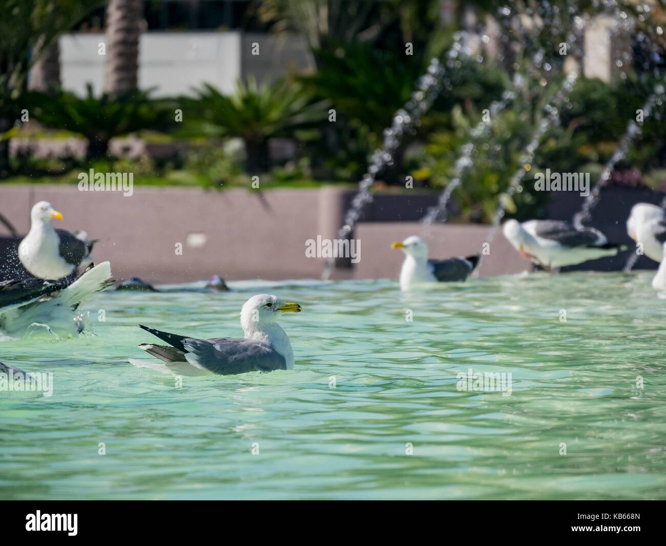 bird playing in water stock photos bird playing in water stock images alamy. Black Bedroom Furniture Sets. Home Design Ideas