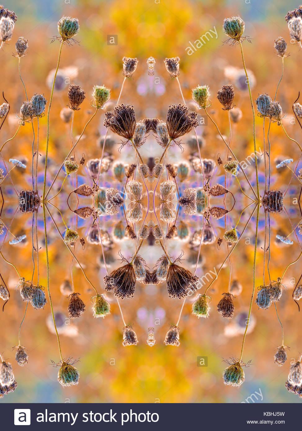 kaleidoscope-pattern-of-fruit-clusters-o