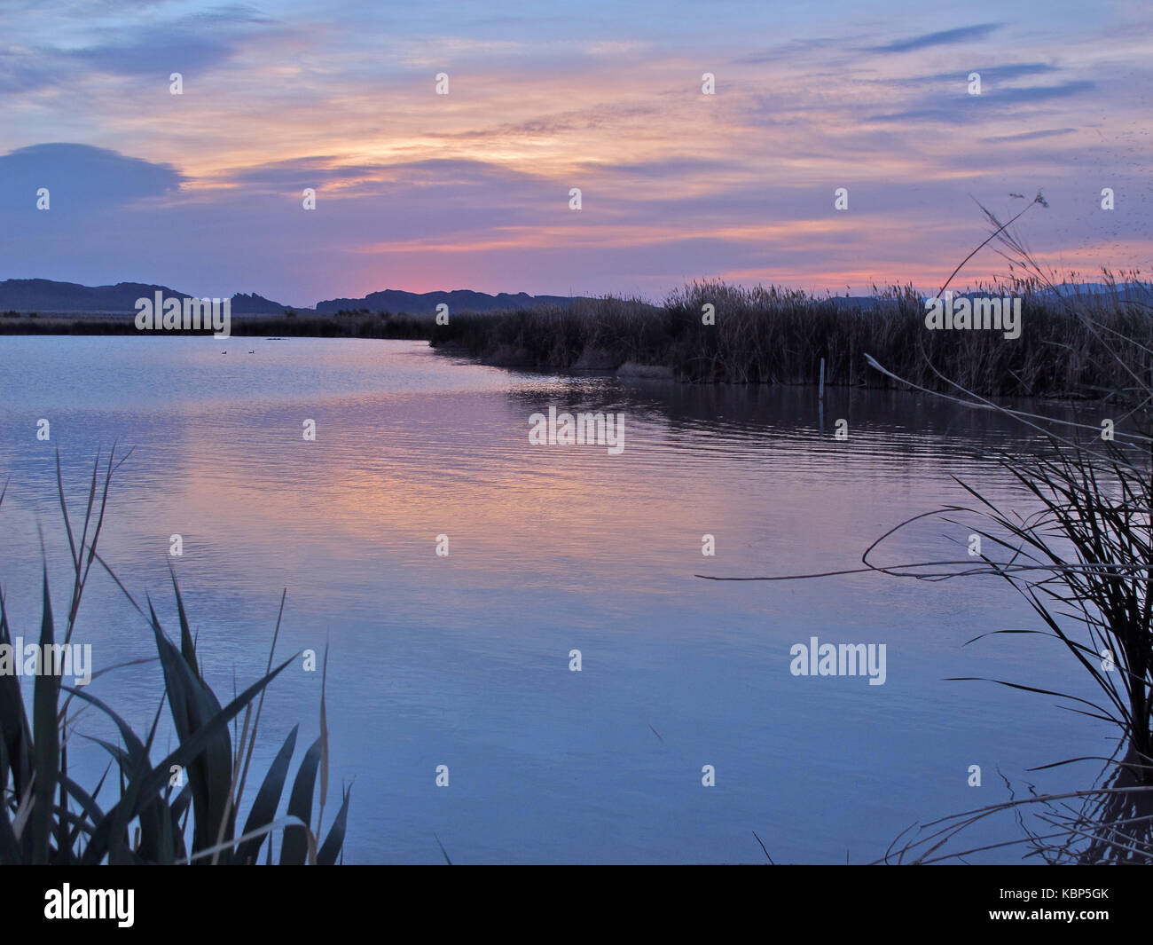 Clark County Wetlands Park, Las Vegas, Nevada - Stock Image