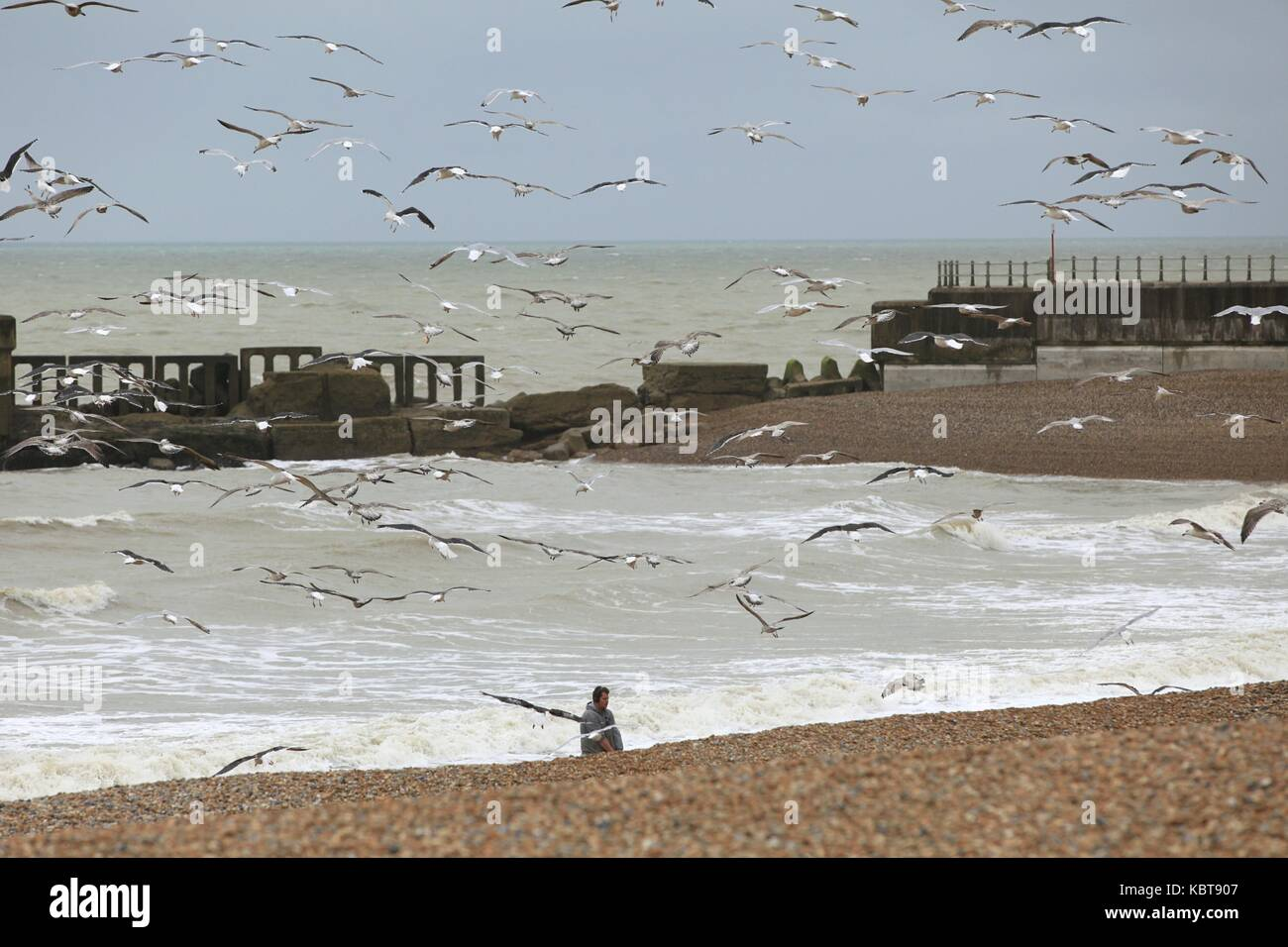 Hastings, East Sussex, UK. 1st October 2017. Local fisherman is seen dragging leftovers for the seagulls to feed Stock Photo