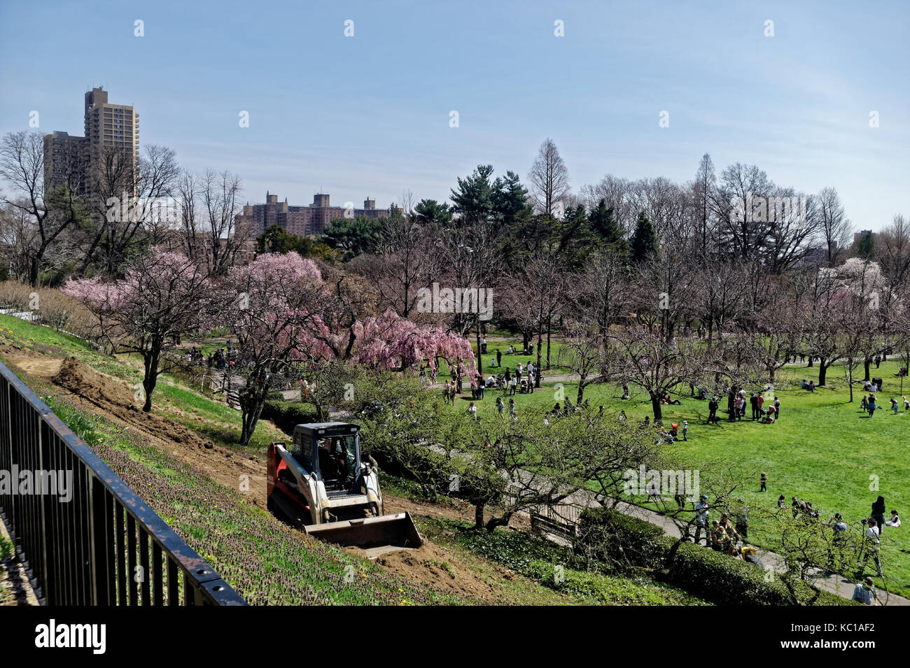 Small tractor working on an area of the Brooklyn Botanic Gardens while visitors enjoy the Spring blooms. - Stock Image