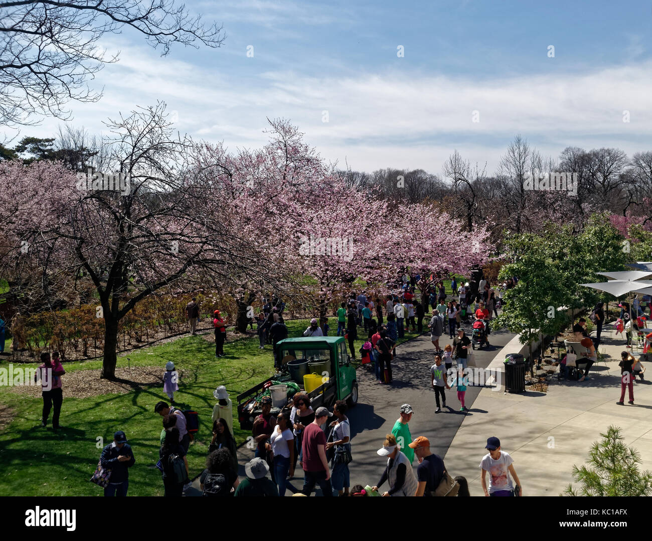 Visitors and tourists walking through the Brooklyn Botanic gardens enjoying the Spring cherry blossom trees bloom. - Stock Image
