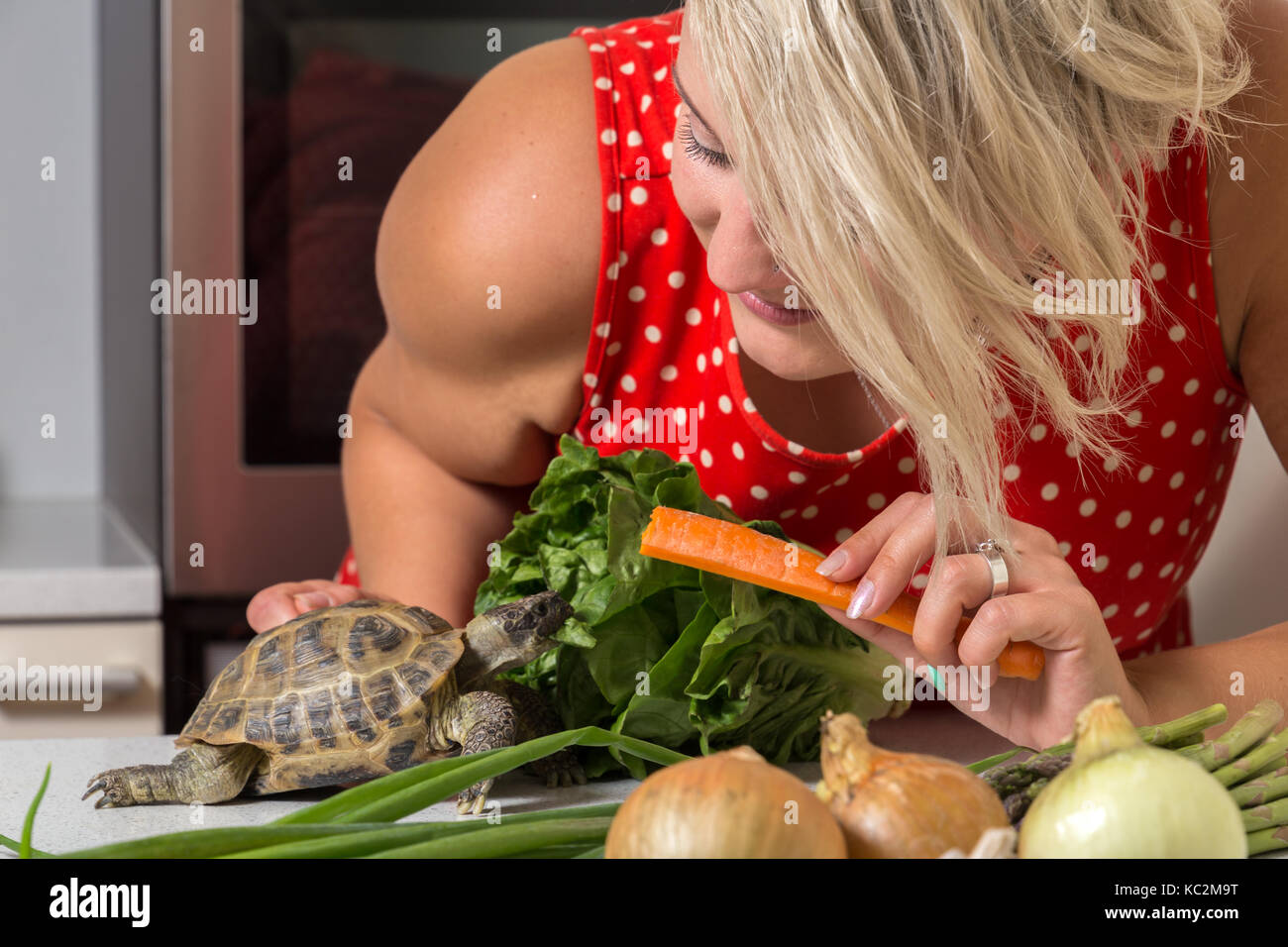 Woman feeding turtle with roman salad and carrot - Stock Image