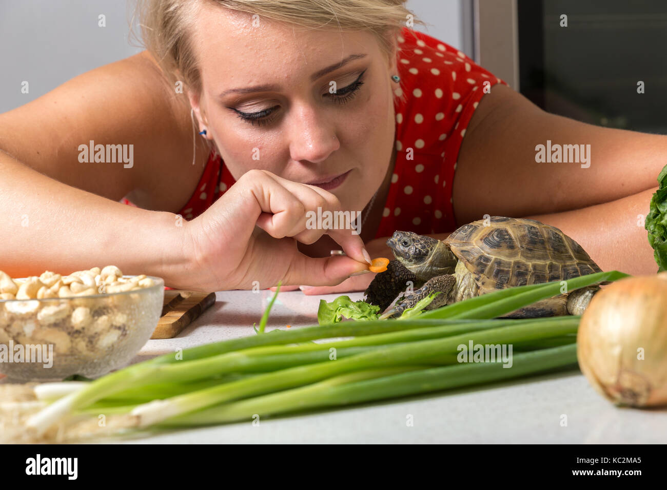 Female tries to feed tortoise with piece of carrot - Stock Image