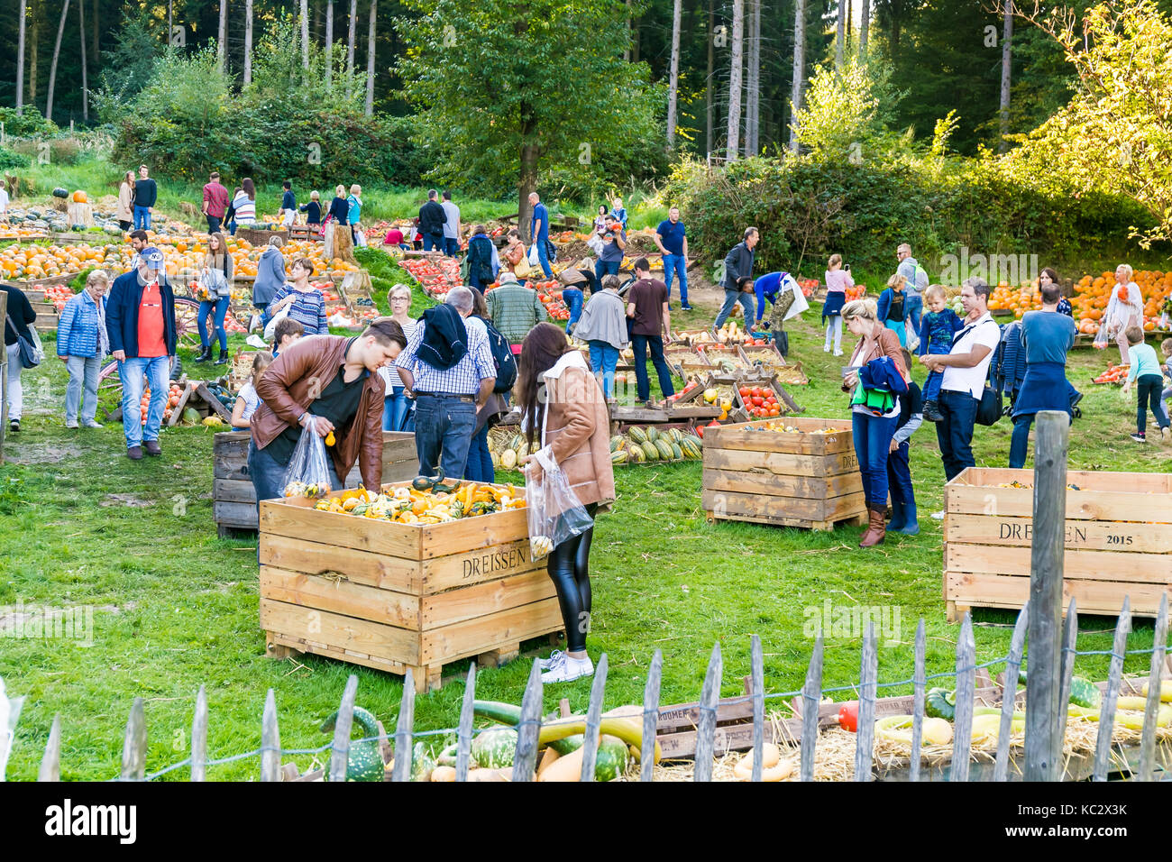 MERODE, GERMANY - SEPTEMBER 23, 2017 - People browse a farm market with pumpkins - Stock Image