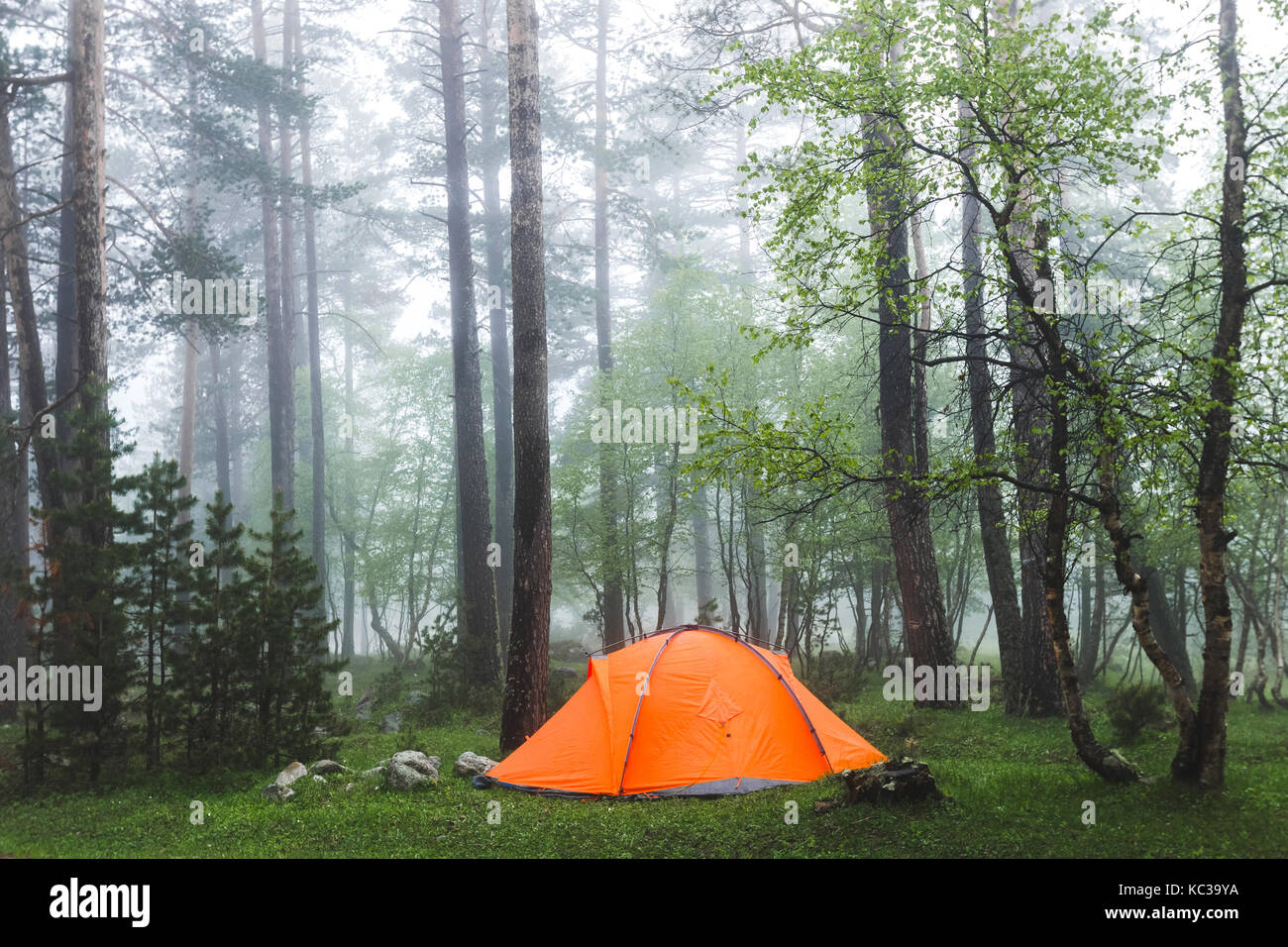 Orange lightweight tent in foggy forest. Cold and wet misty weather in hike, overnight stay - Stock Image