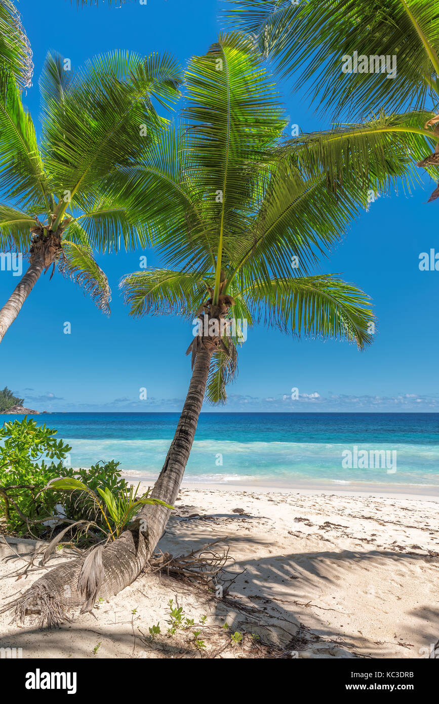 Palm trees and tropical beach - Stock Image
