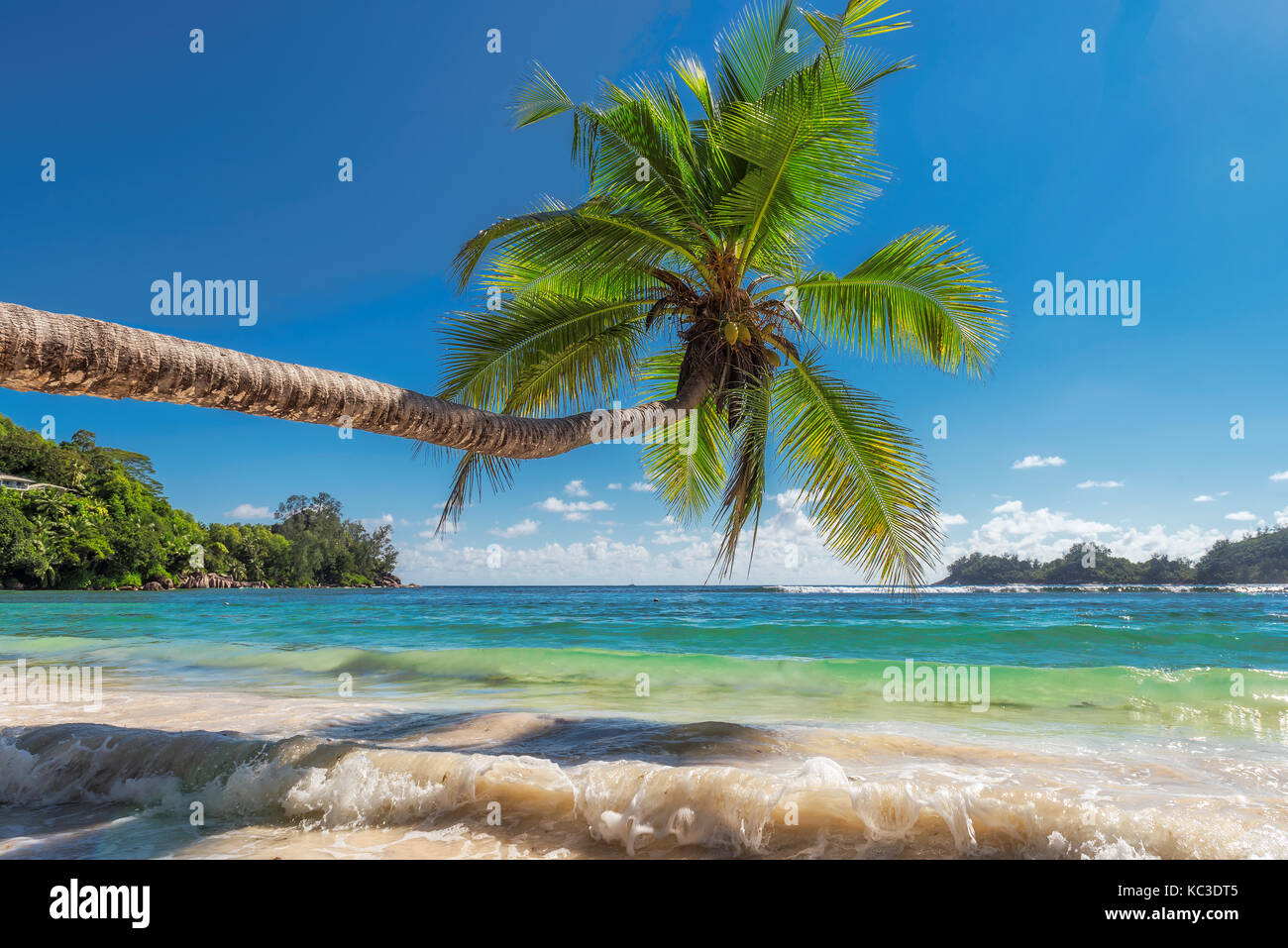The palm tree on beautiful beach. - Stock Image