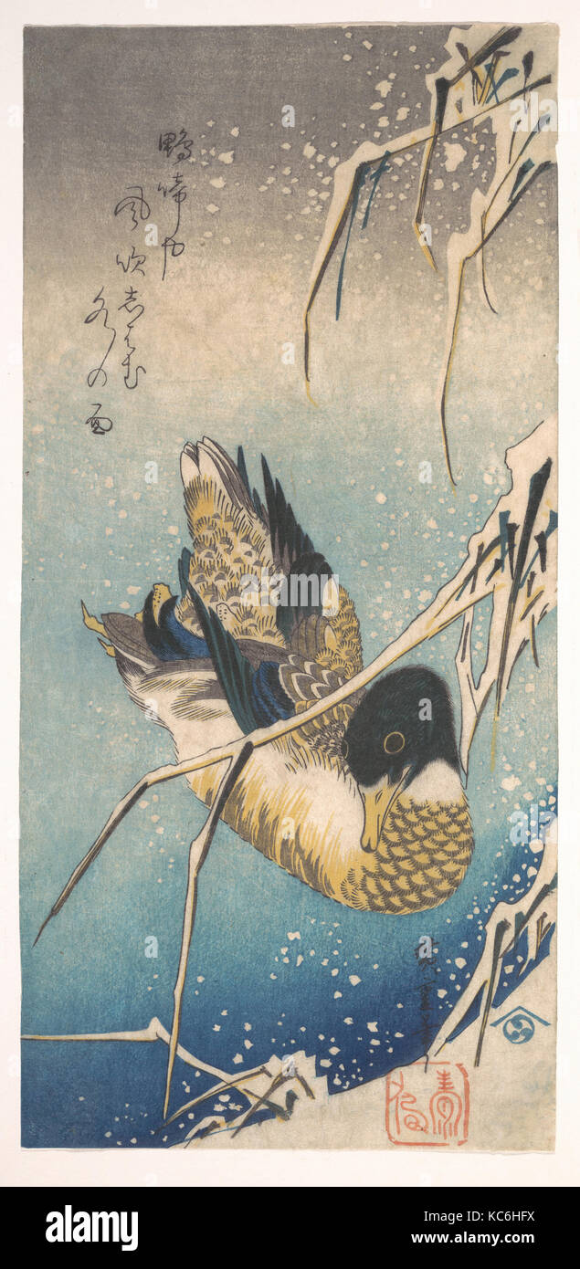 Mallard and Snow-covered Reeds, 歌川広重画 雪中芦に鴨, Edo period (1615–1868), ca. 1843, Japan, Polychrome woodblock print; Stock Photo