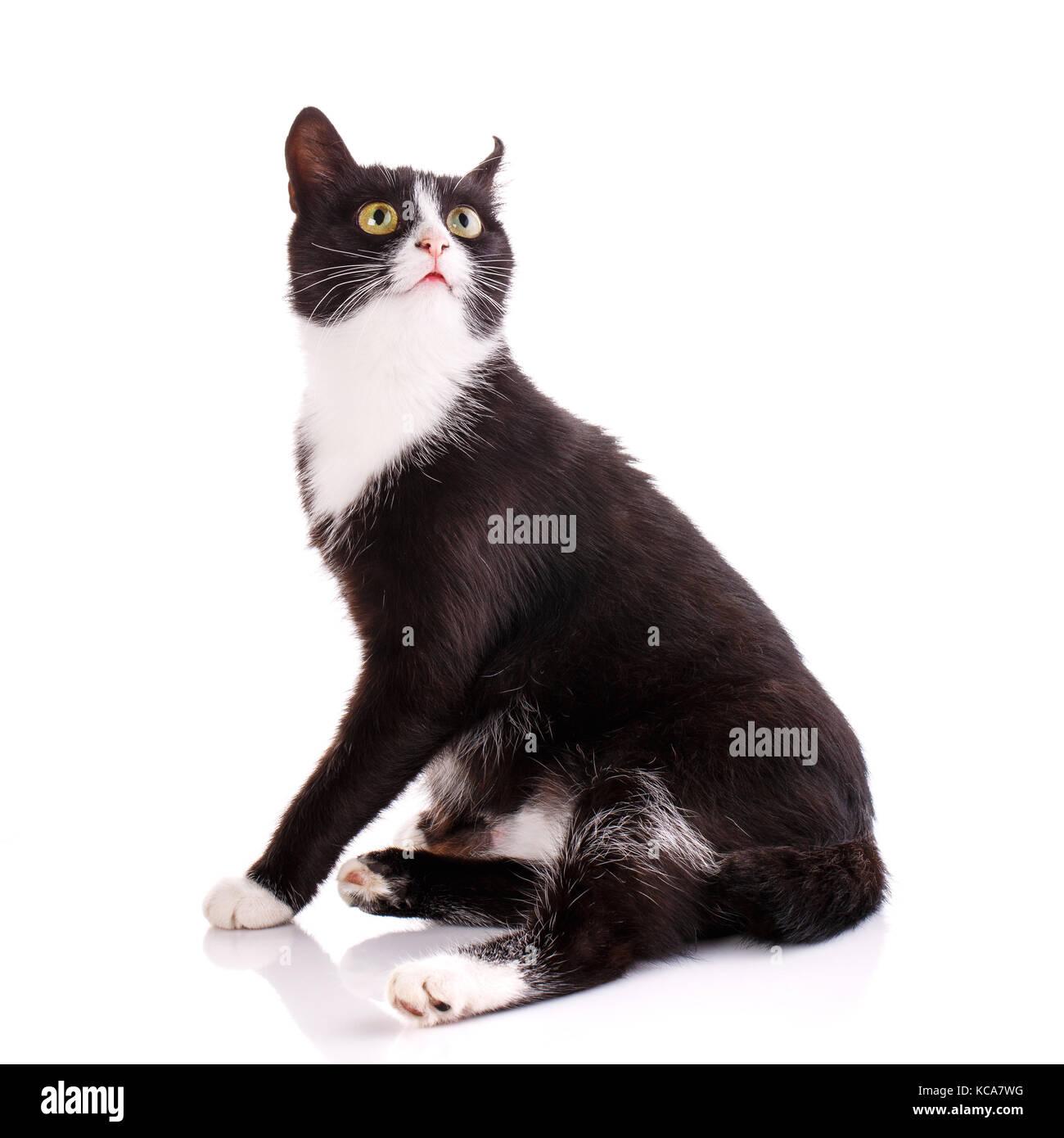 4090b6330 ... Funny Cat Surprised Face: Cat Surprised Stock Photos & Cat Surprised  Stock Images