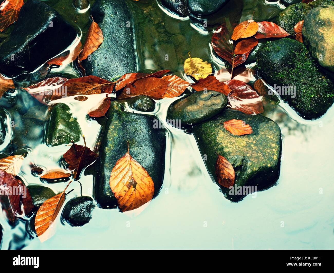 Fall colors. Detail of rotten old leaves  on basalt gravel in mirrored water of mountain stream. Vivid colorful - Stock Image