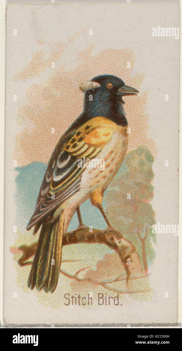 Stitch Bird, from the Song Birds of the World series (N23) for Allen & Ginter Cigarettes, 1890 - Stock Image
