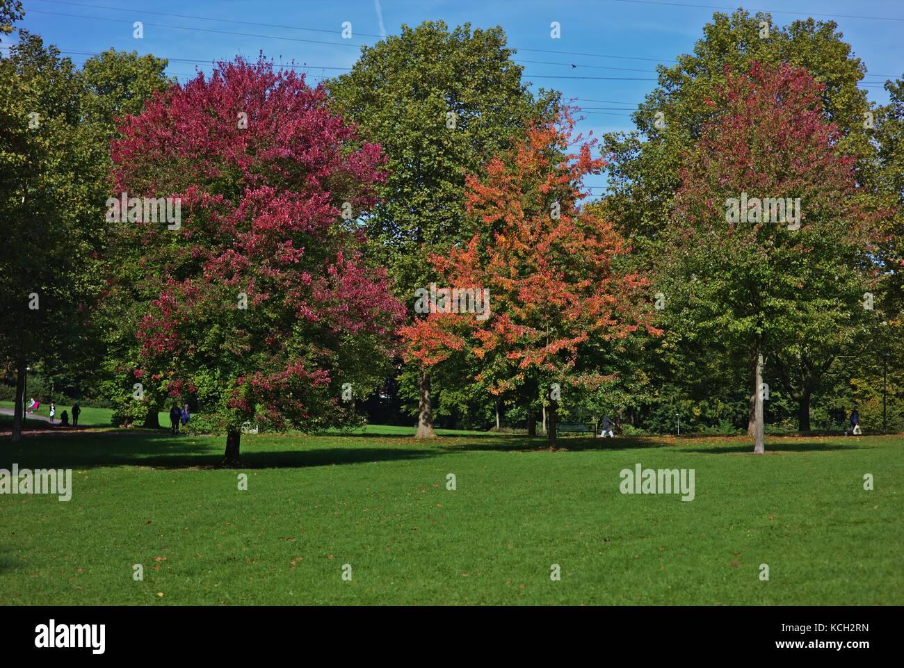 trees-in-fall-KCH2RN.jpg