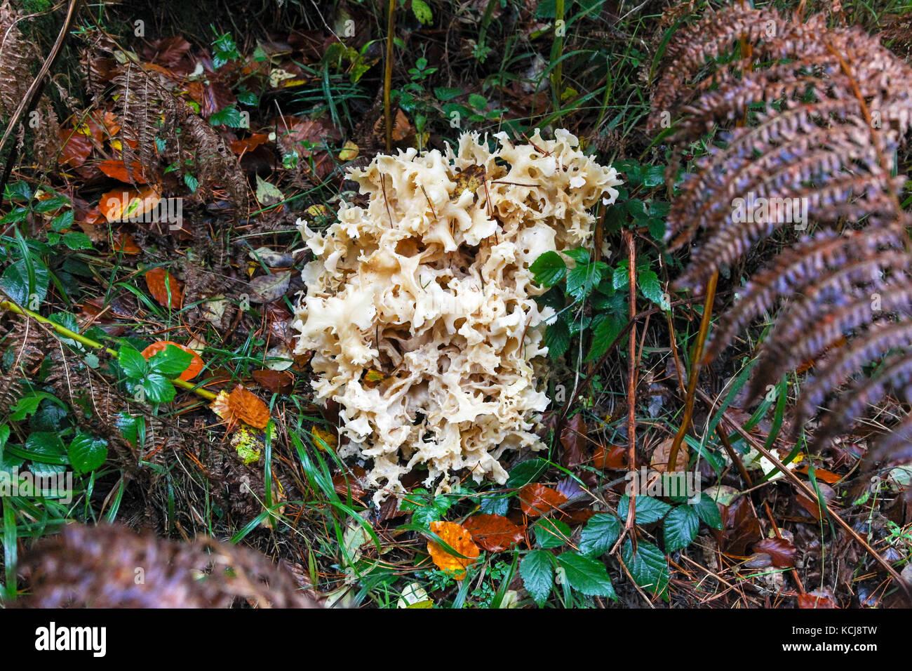 fungus-or-fungi-KCJ8TW.jpg