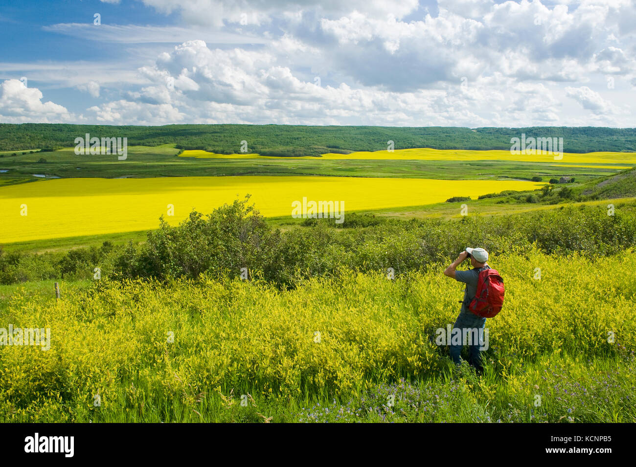 hiker looking out over the Qu´Appelle  River Valley viewing eroded hills and farmland with canola, Saskatchewan, - Stock Image