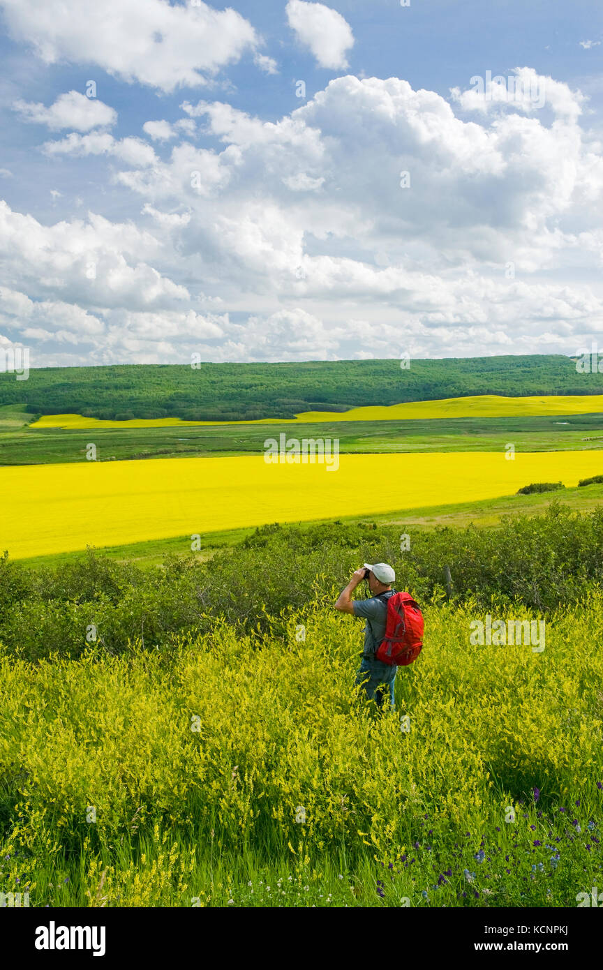 hiker looking out over the Qu´Appelle  River Valley viewing eroded hills and farmland with blooming canola, - Stock Image