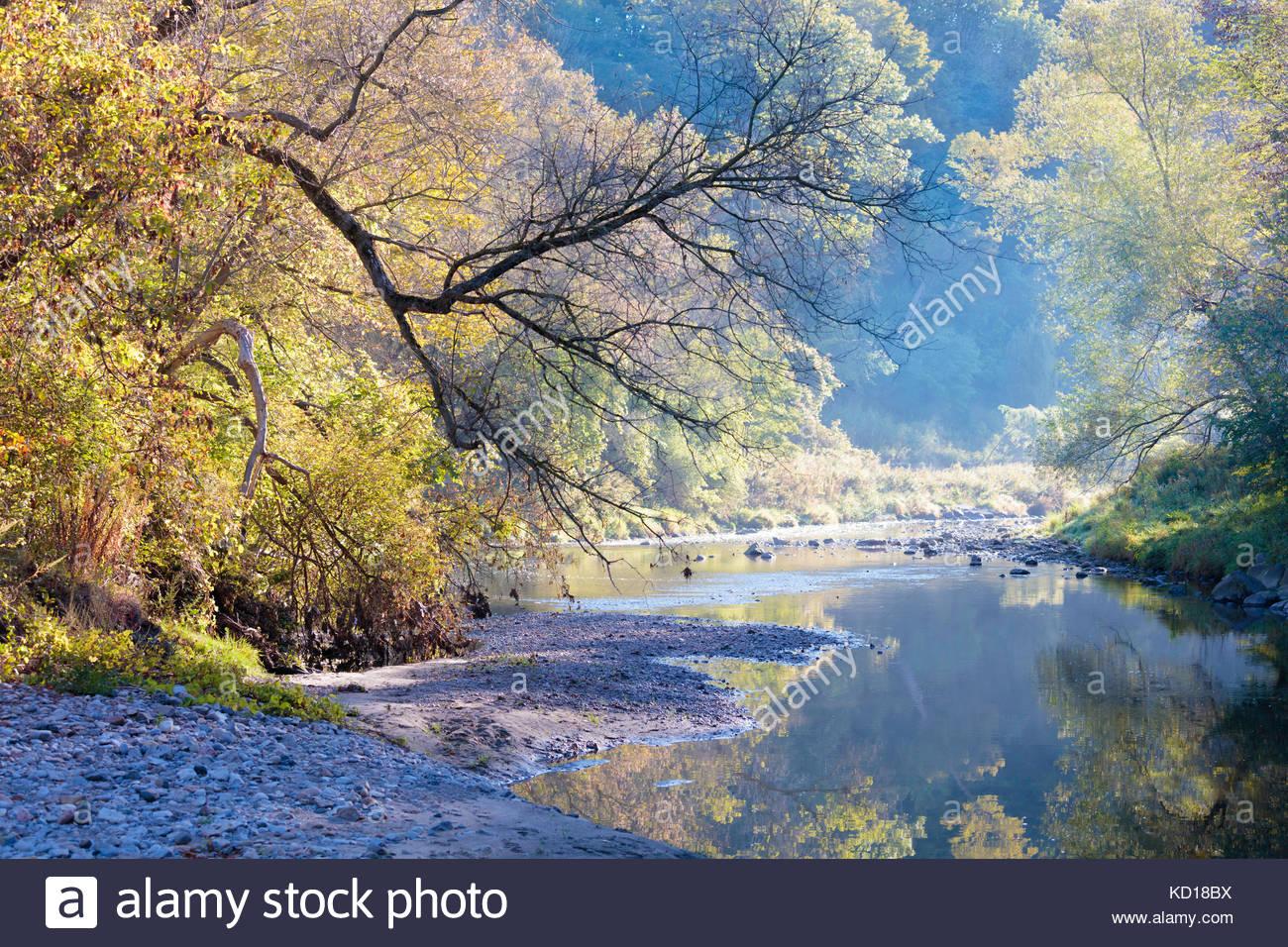 early-autumn-carolinian-forest-reflectio
