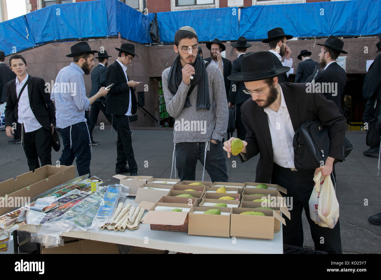 A religious Jewish man selecting an esrog to purchase for the Sukkot holiday. In front of Lubavitch headquarters - Stock Image