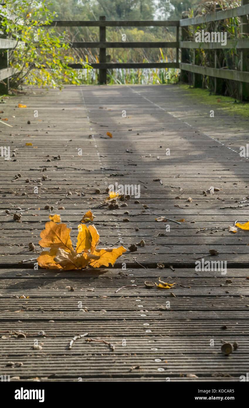autumn-oak-leaves-on-staging-KDCAR5.jpg