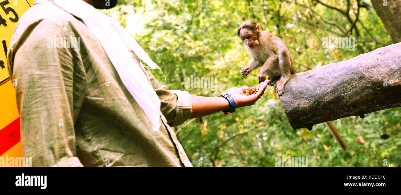 Young man feeding a small monkey - Stock Image