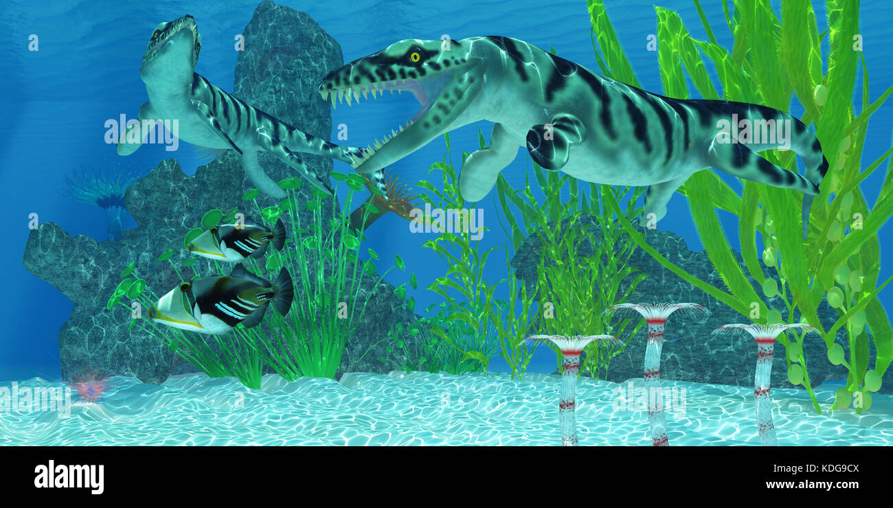 Two Picasso Triggerfish swim away from the Dakosaurus marine reptiles who may threaten their existence. - Stock Image