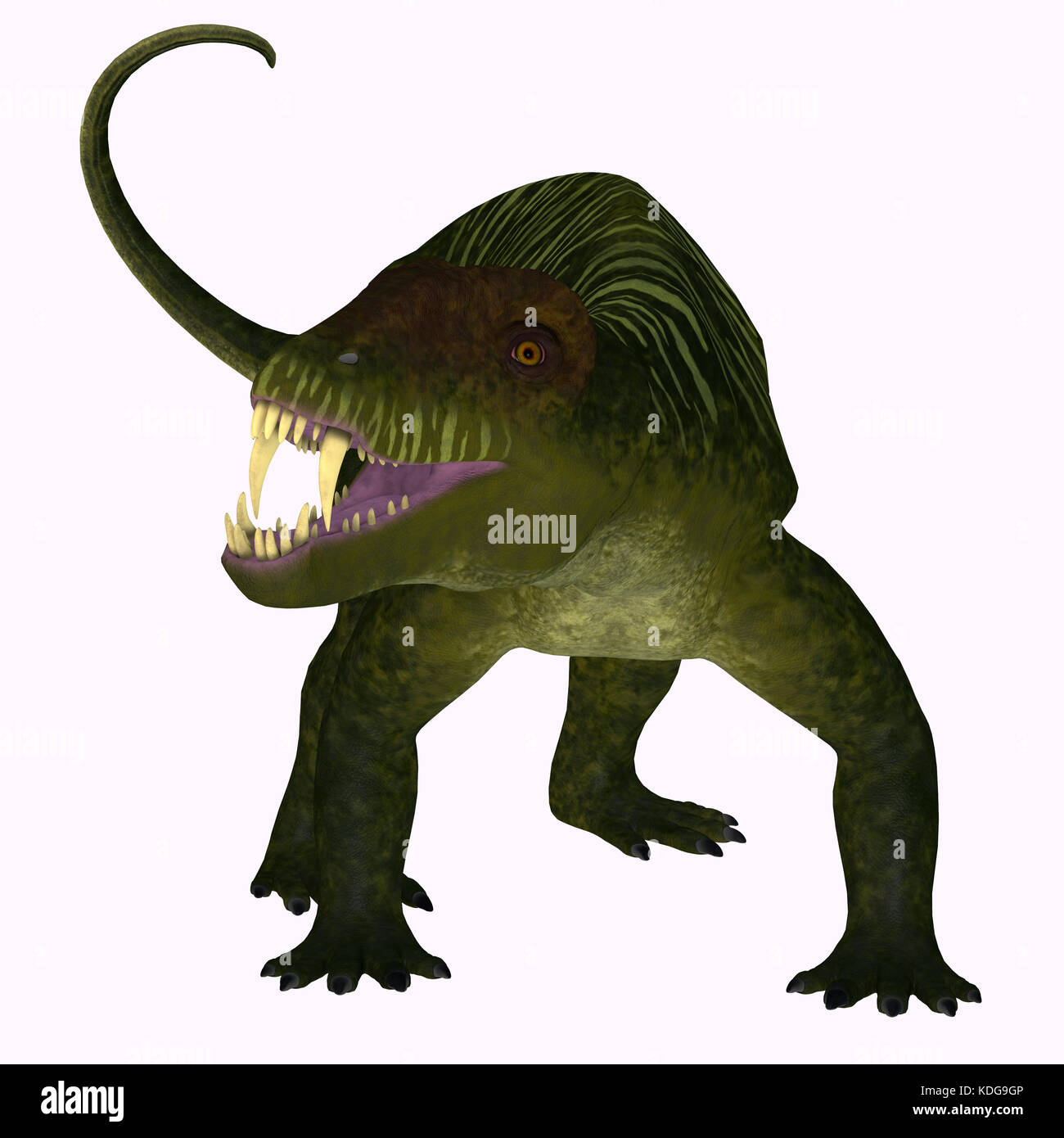Doliosauriscus is an extinct genus of therapsid carnivorous dinosaur that lived in Russia in the Permian Period. - Stock Image