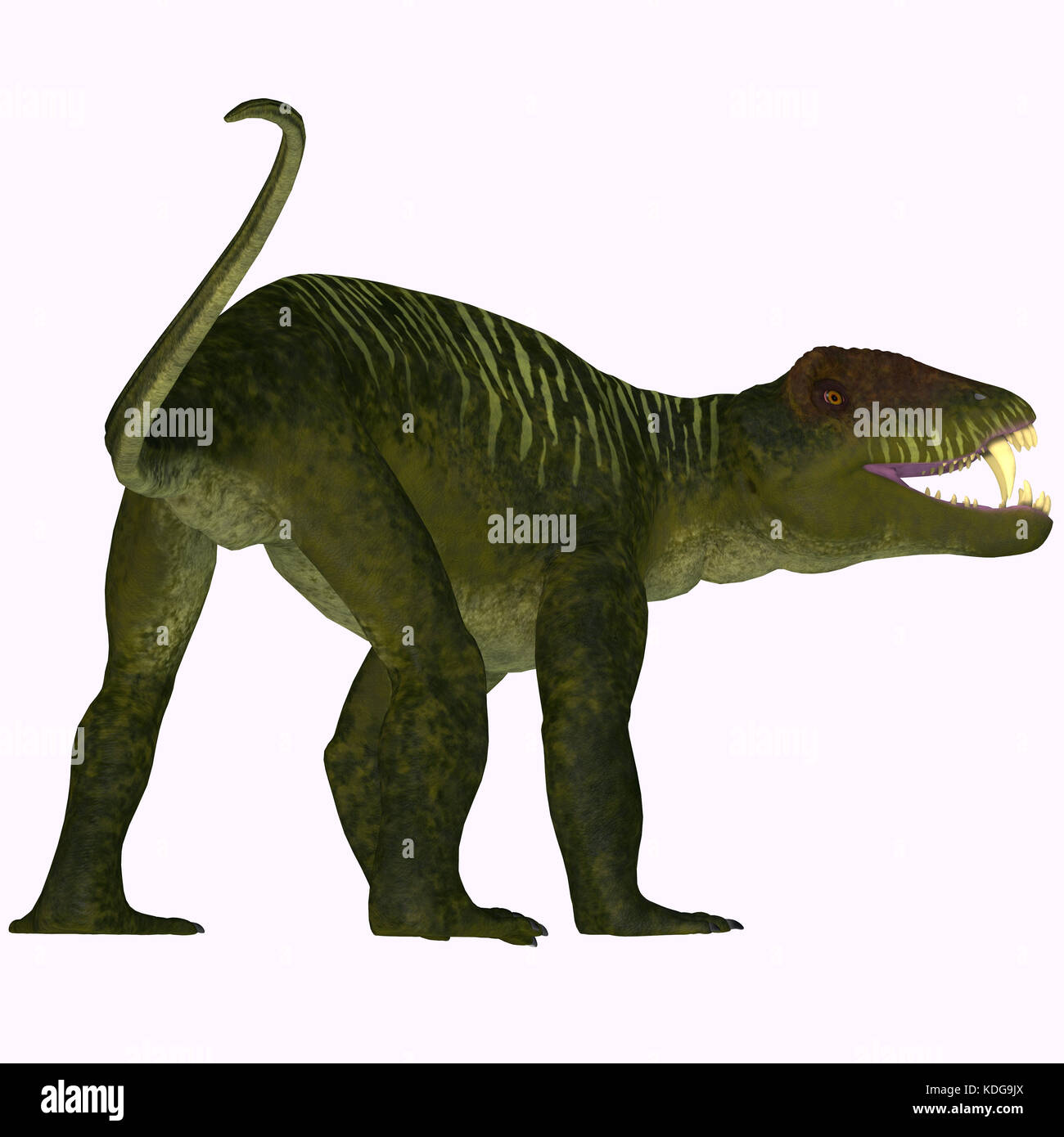 Doliosauriscus Dinosaur Tail - Doliosauriscus is an extinct genus of therapsid carnivorous dinosaur that lived in - Stock Image