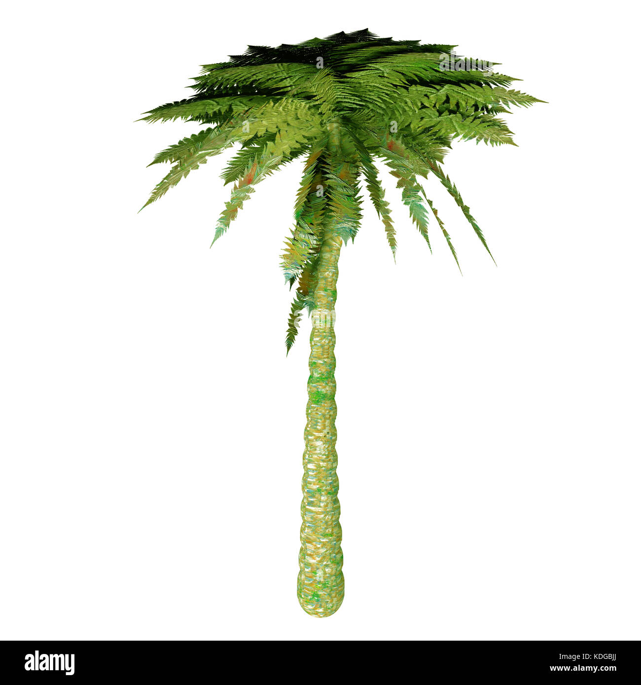 The Silver Tree Fern is endemic to the main islands of New Zealand where it grows mostly in the subcanopy areas - Stock Image