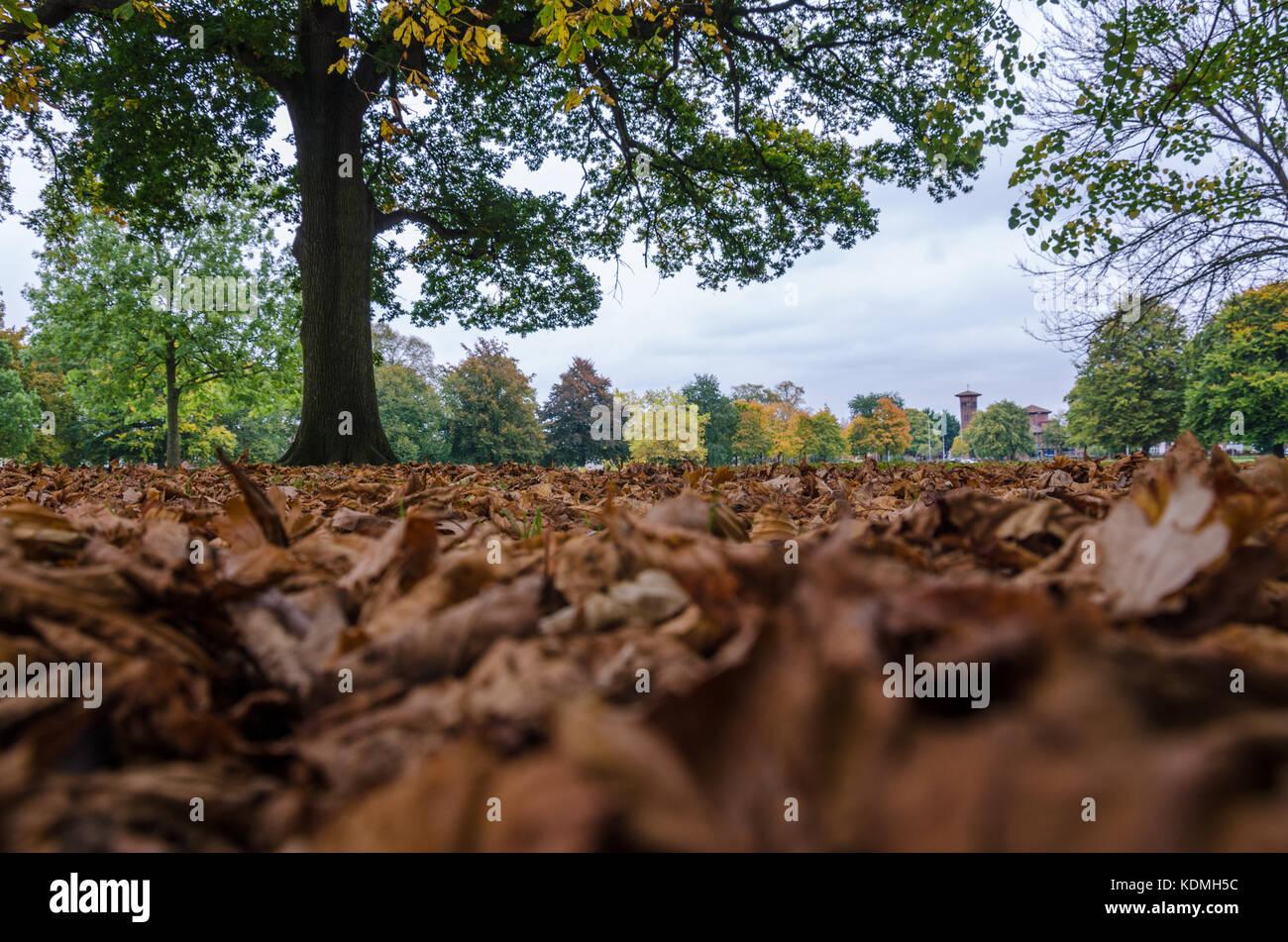 leaf-litter-lying-on-the-ground-in-prospect-park-reading-KDMH5C.jpg