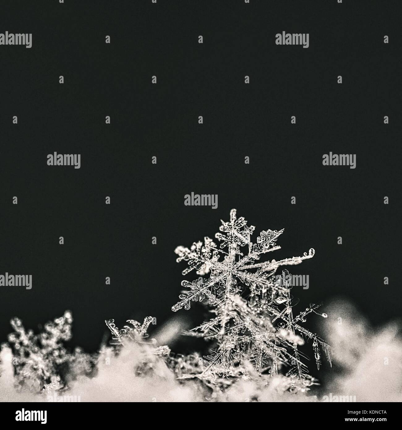 real snowflakes background - photo #34