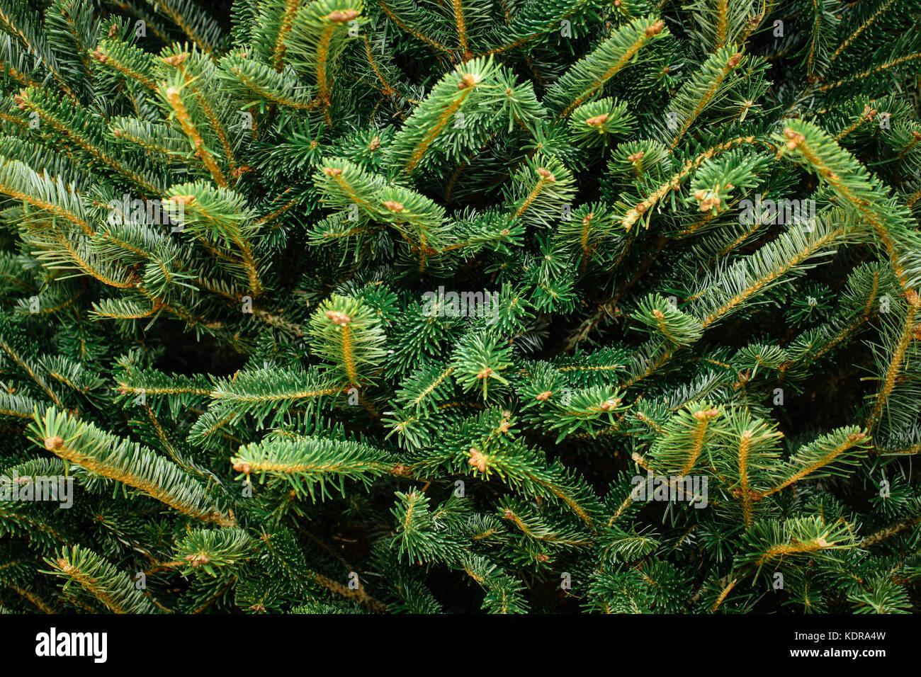 Pine Needles Christmas Stock Photos & Pine Needles