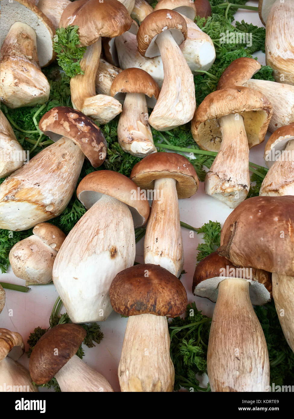 Selection of freshly foraged wild mushrooms - Stock Image