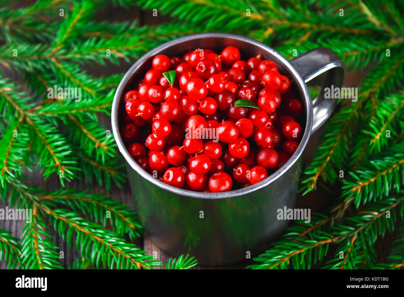cowberry foxberry cranberry lingonberry in an aluminum mug on a stock photo royalty free. Black Bedroom Furniture Sets. Home Design Ideas
