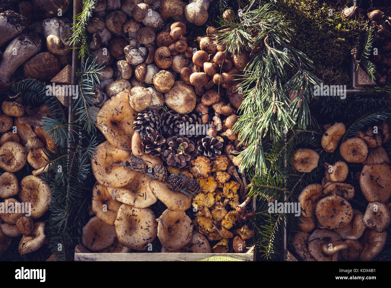 Edible Wild Mushrooms  AmericanMushroomscom