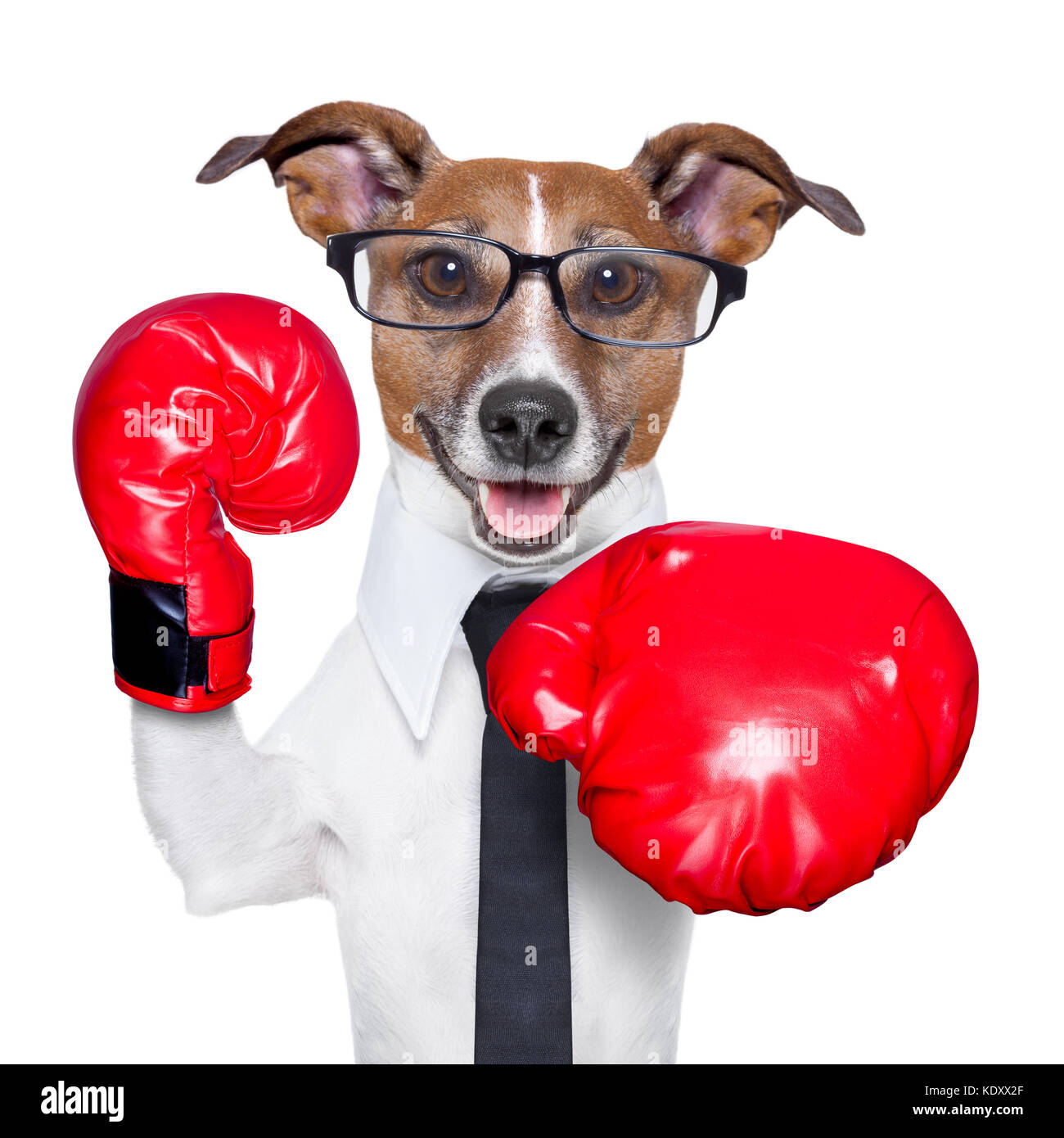 Поздравление с днем бокса боксеров 80