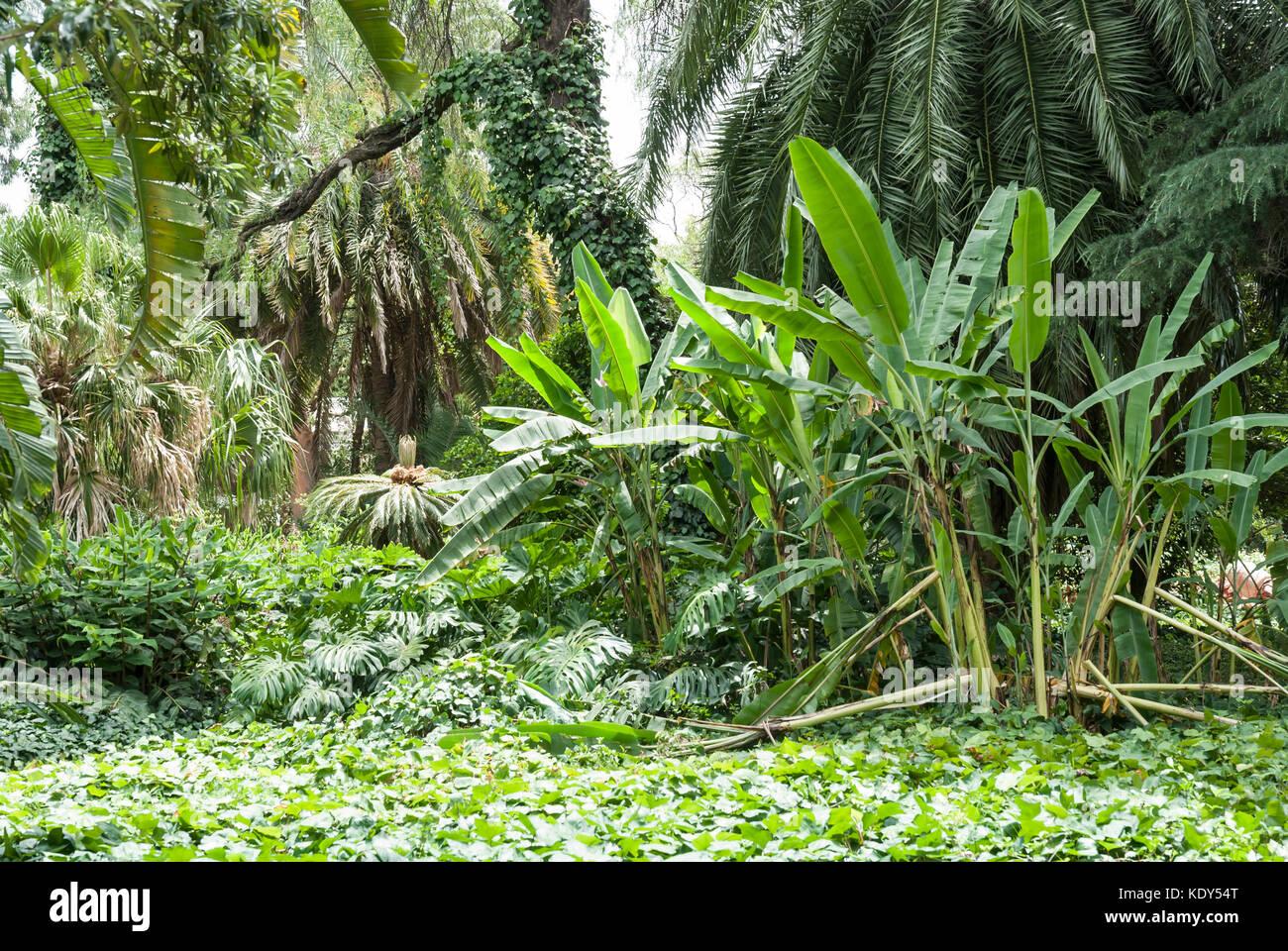 Botanical Garden Palermo District Buenos Stock Photos Botanical Garden Palermo District Buenos