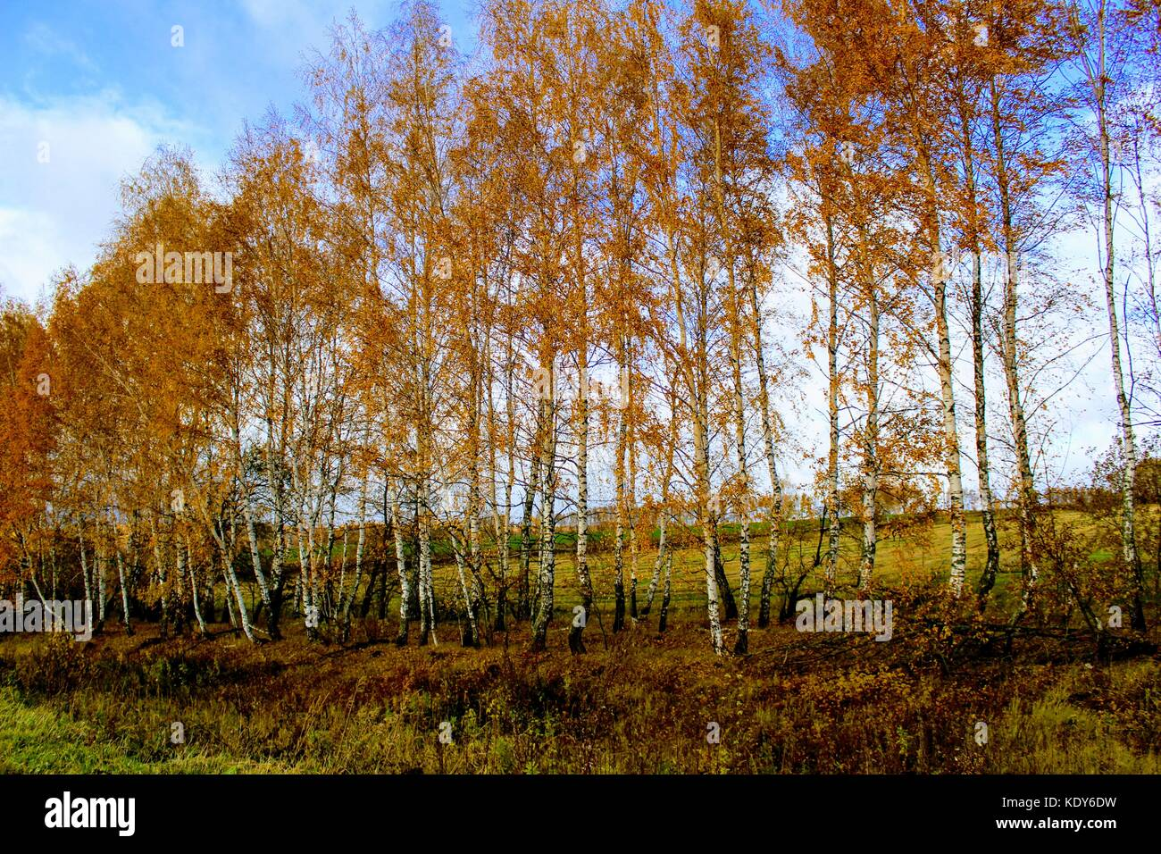 Autumns stock photos autumns stock images alamy - Planting fruit trees in autumn ...