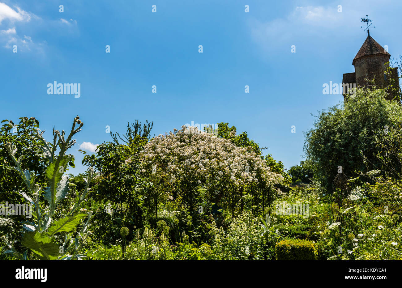 White flowers and blue skies at Sissinghurst Gardens, Kent, UK - Stock Image